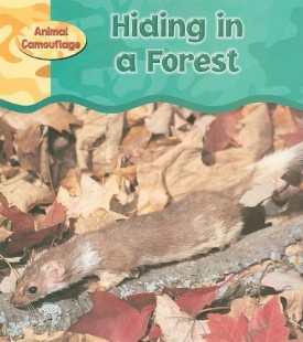 Hiding in a Forest (Animal Camouflage) (Paperback)