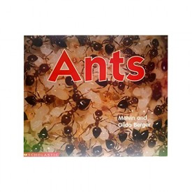 Ants (Scholastic Time-to-Discover Readers) (Paperback)