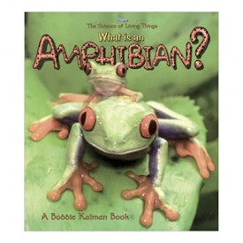 What is an Amphibian? (The Science of Living Things)